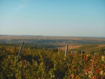 Vinice v Moldávii